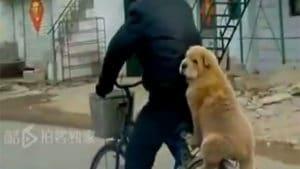 Quand les chiens partagent notre passion du vélo !