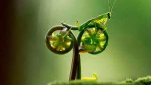Une mante religieuse à vélo, c'est possible !
