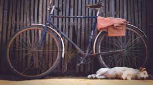 Comment faire du vélo avec son chien ?
